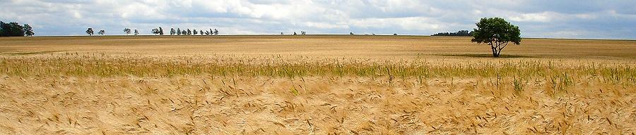 Feldlandschaft bei Plothen (Saaleland)